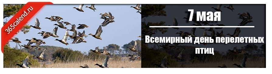 Всемирный день перелетных птиц в 2022 году