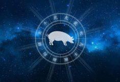 Гороскоп на 2020 год для Свиньи (Кабана)