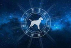 Гороскоп на 2020 год для Собаки