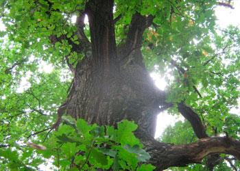 Каких деревьев не должно быть на участке: плохие приметы
