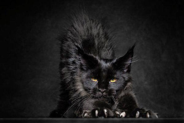 Коты стоят на страже двух измерений