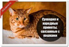 Суеверия и народные приметы, связанные с кошками