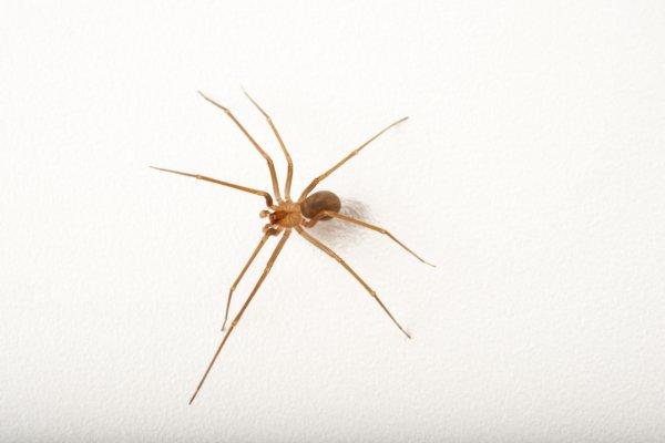 Видеть паука вечером