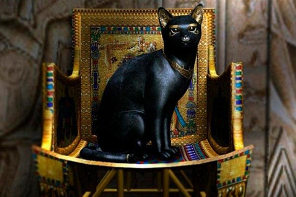 Исторические факты о черных кошках