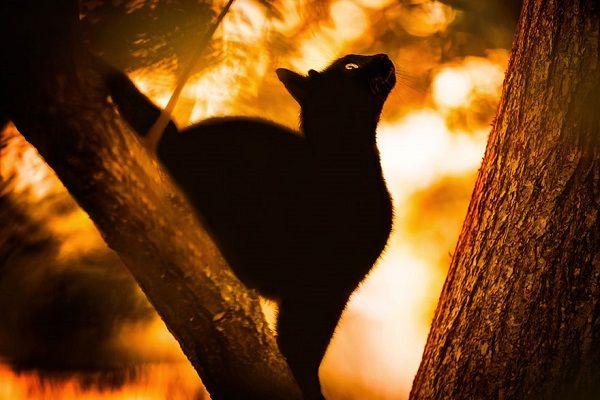 Суеверия разных стран касаемо черных кошек