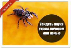 Увидеть паука утром, вечером или ночью
