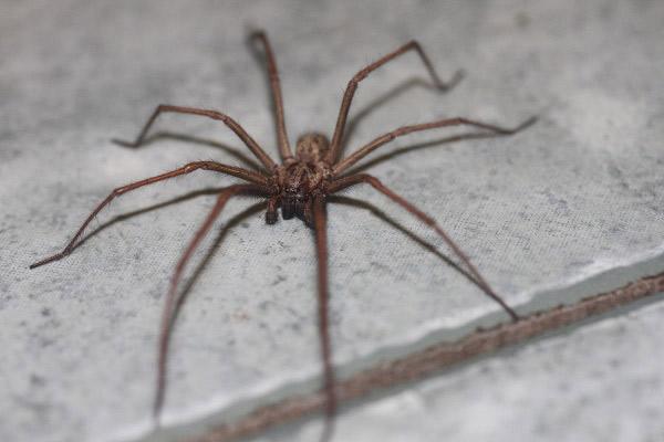 Видеть паука утром