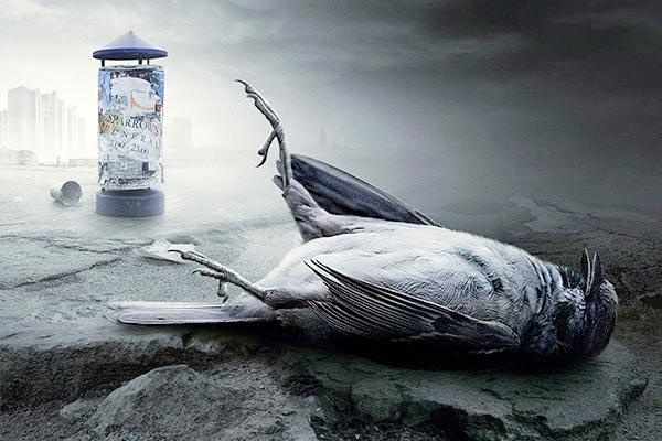 Увидеть мертвую птицу на дороге