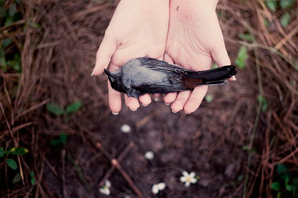 Увидеть мертвую птицу в огороде или в саду