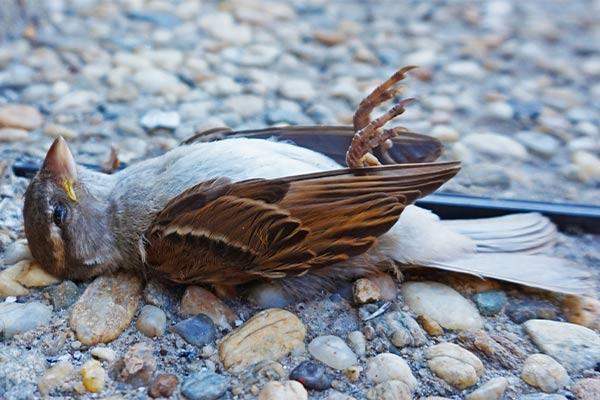 Увидеть мертвую птицу во сне