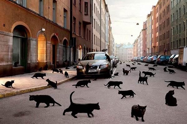 Черная кошка перешла дорогу: как появилась примета