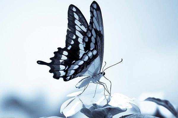Другие приметы, связанные с бабочкой в квартире или доме
