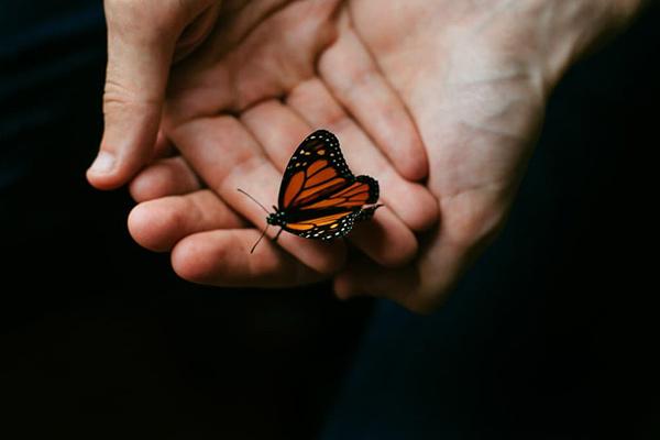 Когда бабочка садится на человека