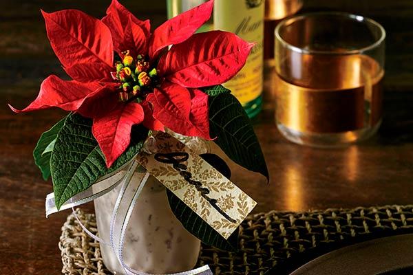 Можно ли дарить рождественскую пуансеттию