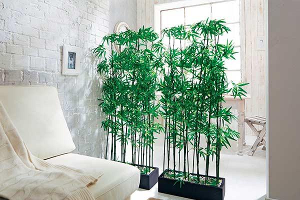 Основные народные поверья, касающиеся комнатного бамбука