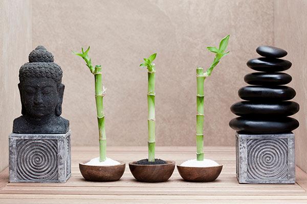 Расположение бамбука и значение его количества