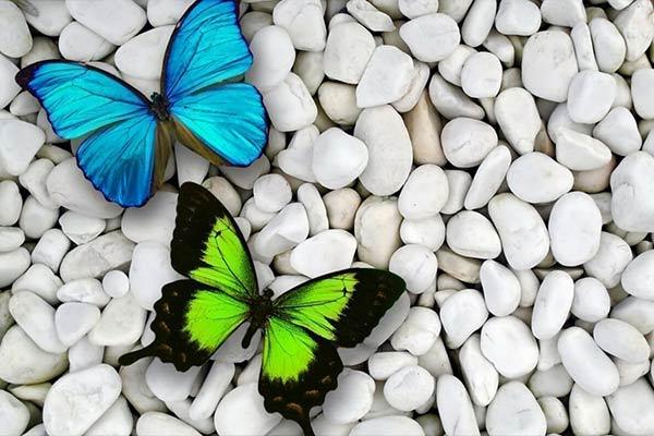 Символика бабочки