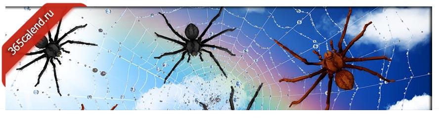 снятся пауки