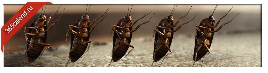 снятся тараканы
