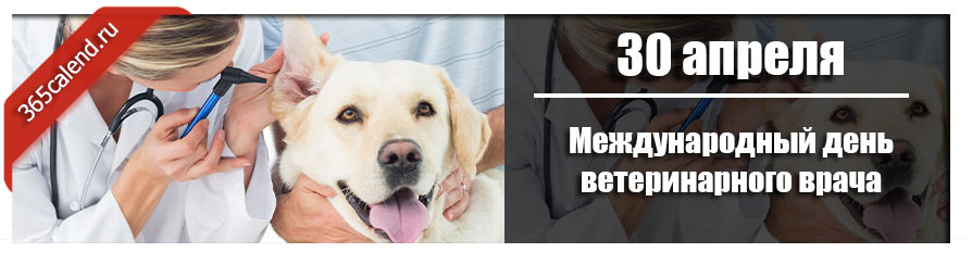 Международный день ветеринарного врача в 2022 году